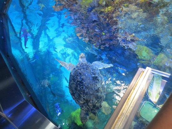 Giant tank with turtle - Picture of New England Aquarium ...