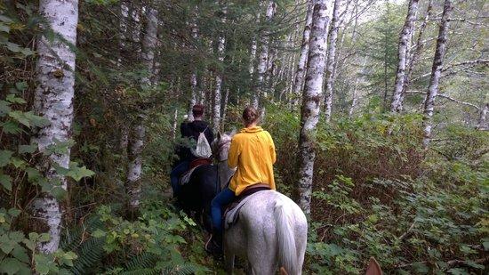 Clayoquot Wilderness Resort: Horseback Riding