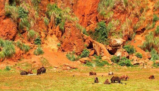 parque de la naturaleza de cabarceno bears