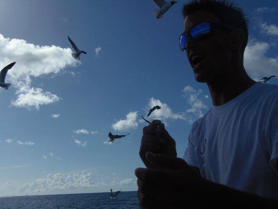 خليج سيمبسون, سانت مارتن: seagulls