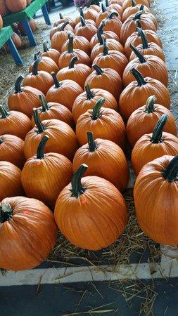 State Farmers Market: Pumpkins
