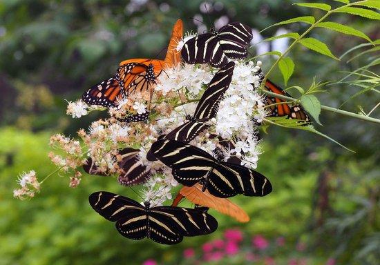 Huntsville Botanical Garden: Butterflies