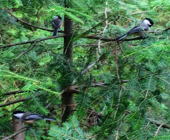 Temagami Shores Inn & Resort: Nature view