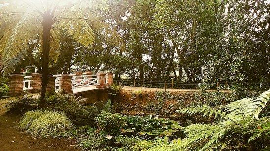 Jardin Botanico Atlantico : La.isla