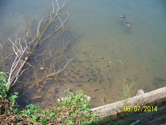 Cross Hill, SC: Feeding the fish and turtles