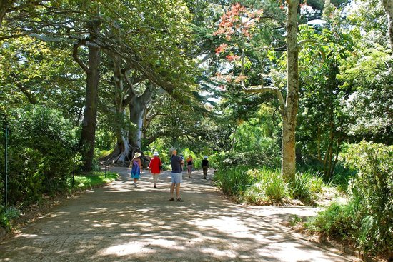 Arderne Gardens: Guided tours are available the first Saturday of every month