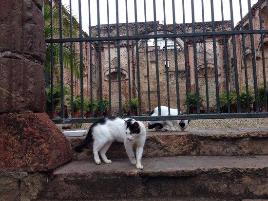 Casco Viejo: 猫も御先祖はスペインから?