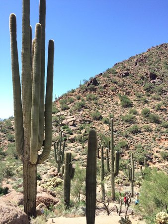Pinnacle Peak Park: Not a lot of shade on this path but there are a few spots closer to the mountain switchbacks.