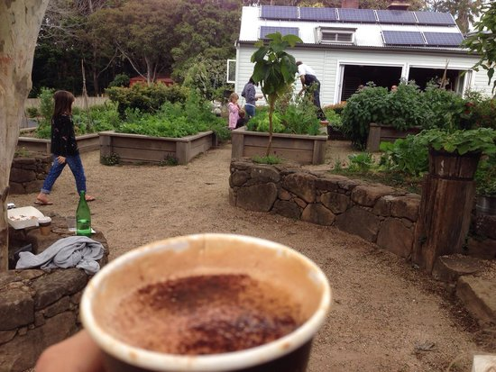 Harvest : Exceptional coffee amongst the luscious garden