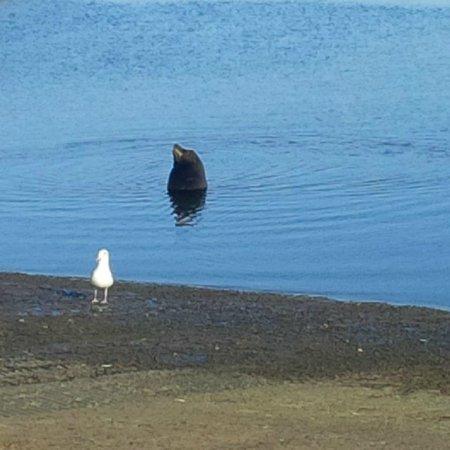Harbor and Shelter Islands : Seal at shelter island at boat ramp