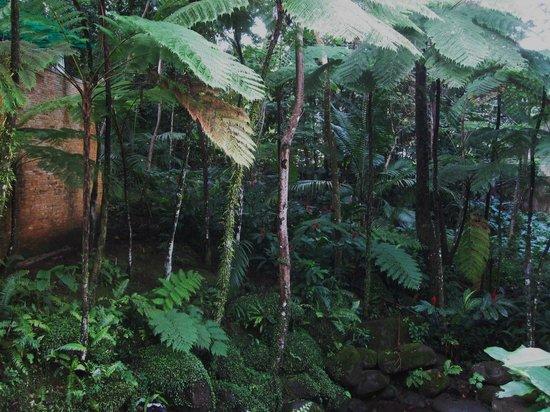 El Portal Tropical Forest Center: Végétation à côté du Centre où débute la visite d'El Yunque