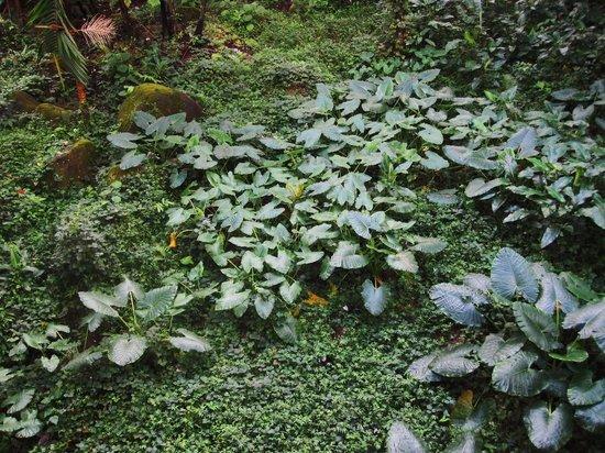 El Portal Tropical Forest Center: Une abondante végétation près du Centre où débute la visite d'El Yunque