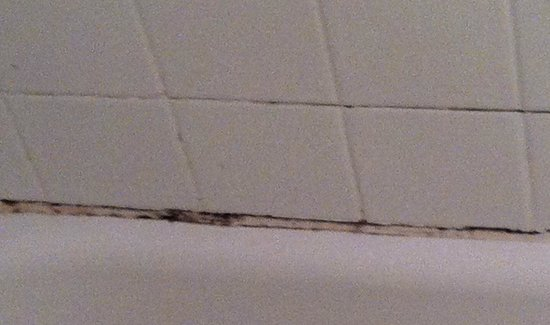 The Shoreline Inn: mold in shower