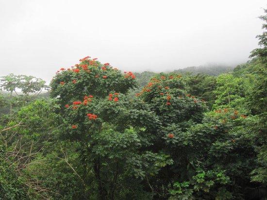 Yokahu Observation Tower: Végétation à côté de la Tour