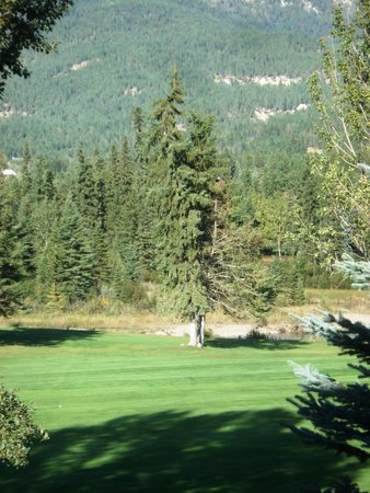 Sunchaser Vacation Villas at Riverside: eagle in tree;  golf course view from room