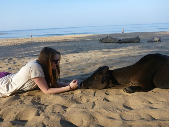 Dunhill Beach Resort : on the beach.. beautiful cows!