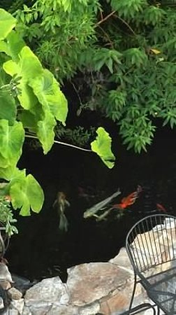 The Kenwood Inn: Koi Pond