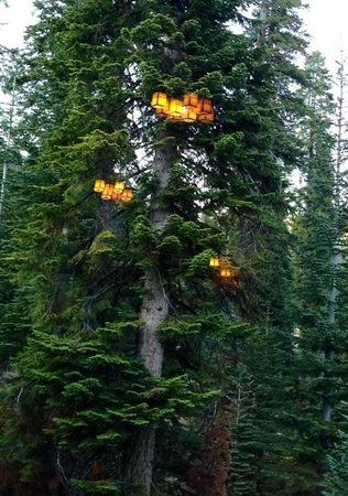 the lights from the dining room reflected in the trees outside.