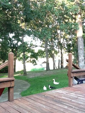 Fishmonger's Cafe: relaxing with the ducks
