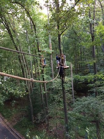 Go Ape Treetop Adventure Course: Obstacle above the road