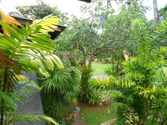 Noppharat Resort : Landscape