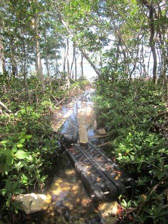 Navy Lodge Key West: Pet walk