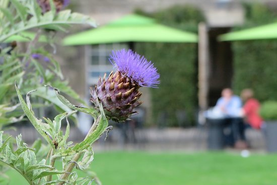 Scottish National Gallery of Modern Art One: Gratuitous thistle shot... sorry.
