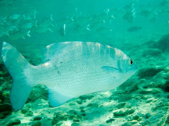 The Edgewater Resort & Spa : Plenty of fish in Reserve in front of resort