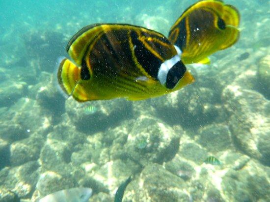 Lawa'i Beach: awesome reef