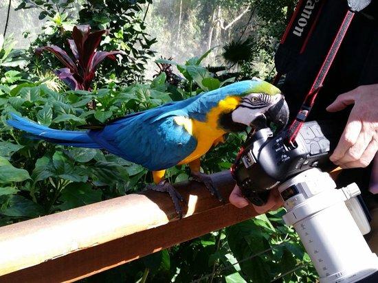 Birdworld Kuranda : Macaw