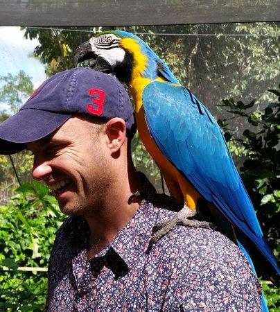 Birdworld Kuranda : After the button on the cap