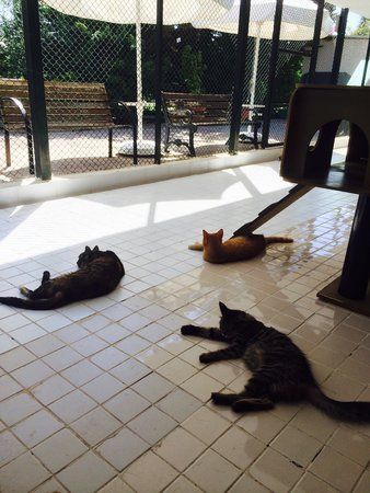 Barut Lara : The Cat Zone