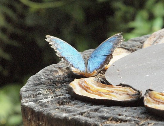Butterfly World: A beautiful butterfly feeding on a banana