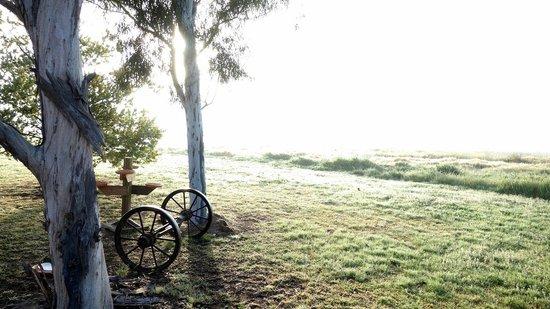 The Vineyard Motel: Mist Magic