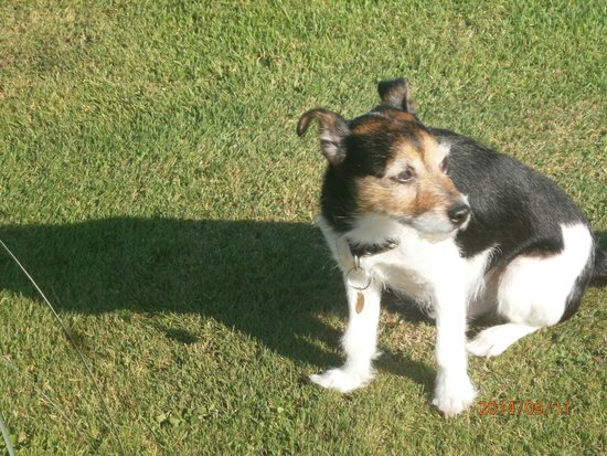 Braigha: The little dog of June& Chic
