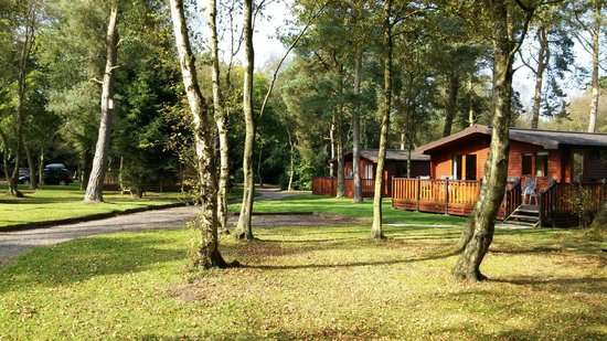 Darwin Forest Country Park: Darwin Forest Lodges