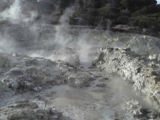 Hells Gate: Mud pool steaming