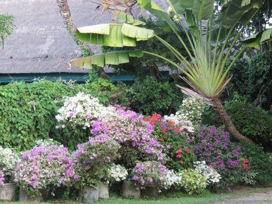 Laghawa Beach Inn: gardens