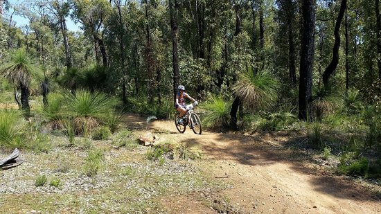 Rock and Roll Mountain Biking