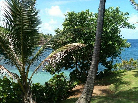 Cabier Ocean Lodge: Blick vom Zimmer in den Garten