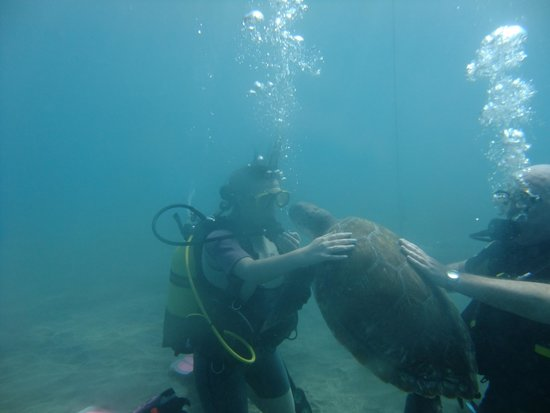The Dive Shop : Swimming with a friendly turtle