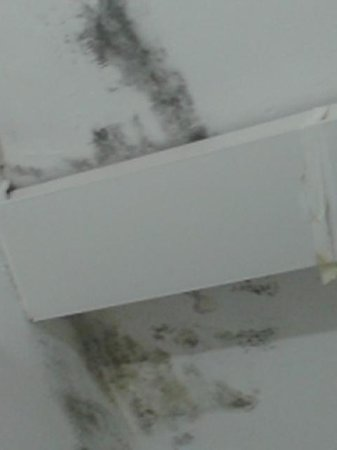 Hotel Caribe: Mouldy ceiling over shower