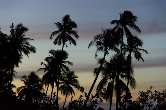 Amber Sands Beach Resort : The palms in silhouette - taken on our first evening