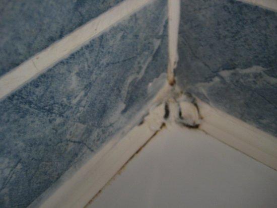 Seven Oaks Hotel: mould in corner of bath room 227