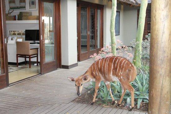 andBeyond Phinda Mountain Lodge : Nyala in reception