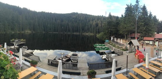 Berghotel Mummelsee : View from room