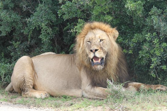 Saw this lovely specimen at Addo Elephant Park so near to Elephants Footprint Lodge