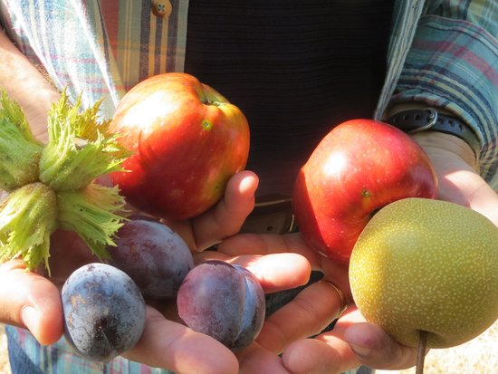 Lobenhaus Bed & Breakfast & Vineyard: Joe even shares his orchard delights