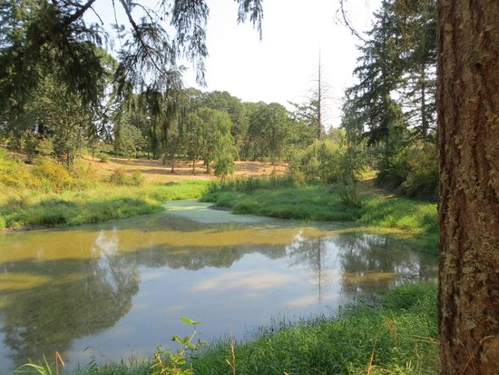 Lobenhaus Bed & Breakfast & Vineyard: Walk past the pond out into the vineyards