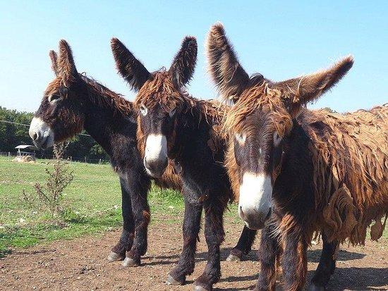 Poitou Donkey Nature Centre (Pôle-Nature de l'Asinerie du Baudet du Poitou)